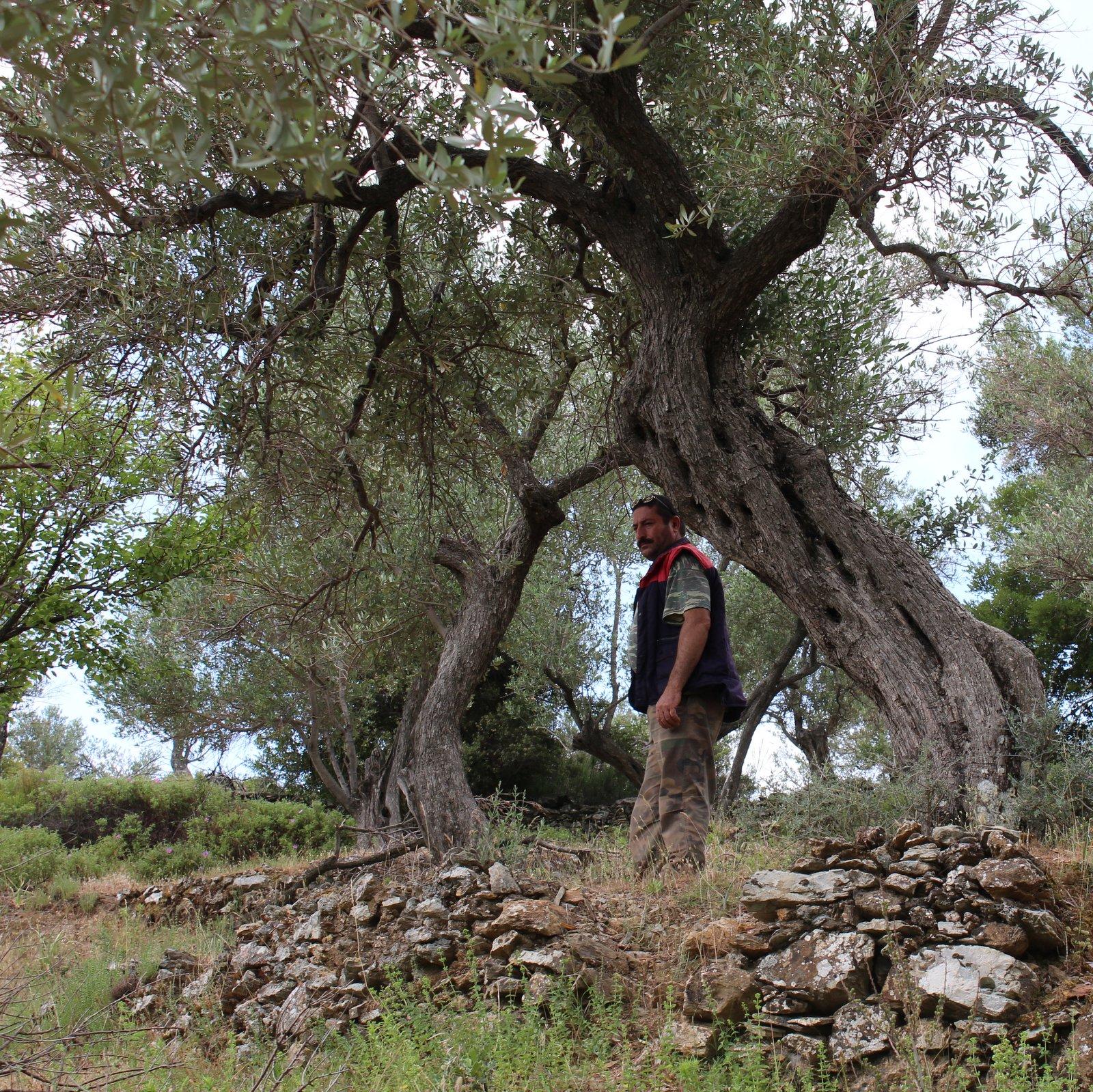 premium ekstra jomfru olivenolie
